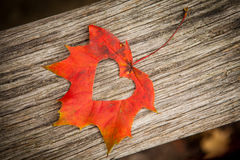 Free Autumn Leaf Heart Stock Photography - 27161192