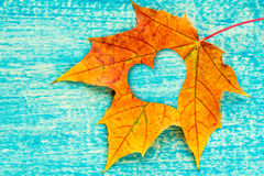 An autumn leaf with heart shaped cutout Royalty Free Stock Photo