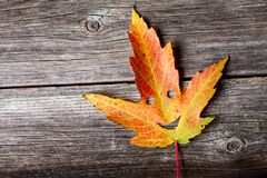 Autumn Leaf heureux images stock