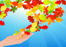 Autumn leaf in human hands Stock Photos