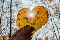 Autumn Leaf i Shape av hjärta och solstrålar som igenom går Royaltyfri Fotografi