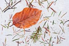 Autumn leaf on ice Stock Images
