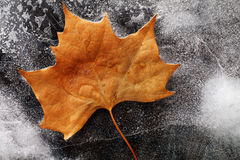 Autumn Leaf on Ice. Autumn leaf frozen in ice on black background photographed in studio stock photos