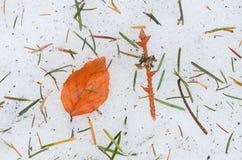 Autumn leaf on ice Stock Image