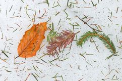 Autumn leaf on ice Royalty Free Stock Images