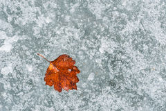 Autumn leaf on the ice Royalty Free Stock Photography