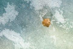 Autumn leaf on the ice. Stock Photo