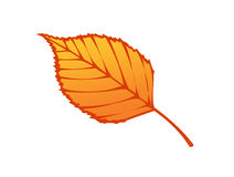 Autumn leaf illustration Royalty Free Stock Photo