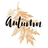 Autumn leaf and inscription by hand Autumn. Vector illustration Stock Photos