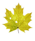 Autumn leaf - isolated Royalty Free Stock Photos