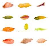 Autumn Leaf Isolated On White Stock Images