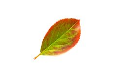 Autumn leaf isolated over white Royalty Free Stock Photos