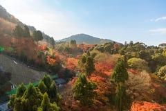 Autumn leaf in Kiyomizu-dera temple Stock Image