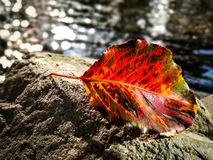 Autumn leaf by the lake royalty free stock photos