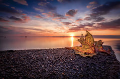 Autumn leaf on the lake at sunset Stock Photos