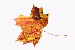 Autumn leaf with landscape Stock Photo