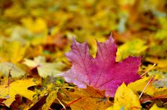 Autumn leaf landscape stock photography