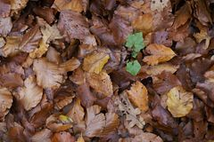 Many autumn leaf laying on the ground. stock photos