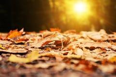 Autumn, Leaf, Leaves, Park, Light Stock Image