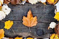 Осенние листья и дерево stock photography