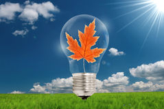 Autumn leaf in light bulb Royalty Free Stock Photo