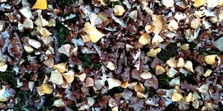 Autumn leaf litter in garden or park, fall outdoor nature background with colorful fallen leaves. Autumn leaves fall in the Park royalty free stock photos