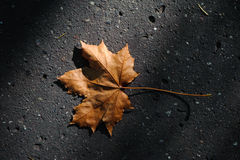 Autumn leaf. Lying alone on the asphalt Stock Images