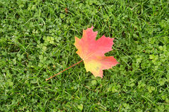 Autumn Leaf Lying on Grass Stock Photo