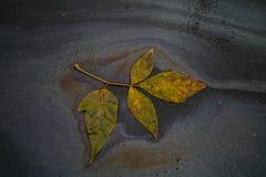 Autumn leaf macro Stock Photography