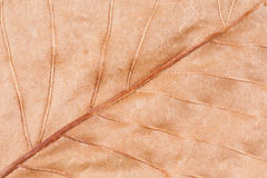 Autumn Leaf Macro seco Imagen de archivo