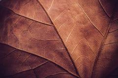 Autumn leaf macro texture Stock Photography