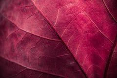 Autumn leaf macro texture Royalty Free Stock Photo