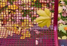 Autumn leaf on metallic bench background Royalty Free Stock Photos