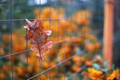 Autumn leaf. A leaf in a metallic fence Royalty Free Stock Photos