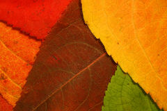 Autumn leaf mosaic. Colorful fall leaf background mosaic Stock Photos