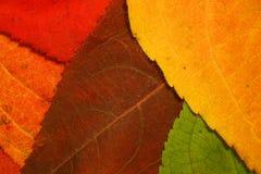 Autumn leaf mosaic. Colorful fall leaf background mosaic stock photos