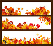 Autumn leaf, mushroom and berry banner border Stock Photo