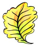 Autumn leaf of an oak. Watercolor. Bright yellow-hot sheet of oak. Autumn mood. Watercolor Stock Image