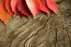 Free Autumn Leaf On Tree Stump Stock Images - 77934604