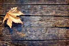Autumn Leaf is op de Houten Raad Stock Afbeelding