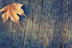 Autumn Leaf is op de Houten Raad Stock Foto's