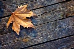 Autumn Leaf is op de Oude Houten Raad Royalty-vrije Stock Fotografie