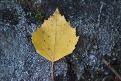 Autumn Leaf op een Steen royalty-vrije stock afbeelding