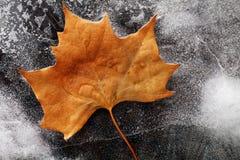 Autumn Leaf op Ijs Stock Foto's