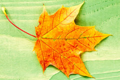 Autumn leaf over green wooden background Royalty Free Stock Photos