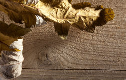 Autumn leaf over old board Royalty Free Stock Photography