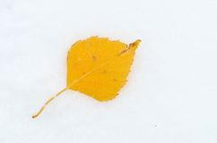 Autumn leaf over snow Royalty Free Stock Image