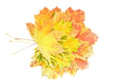 Autumn Leaf over white. Royalty Free Stock Images
