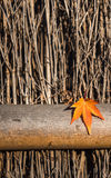 Autumn leaf over wooden background Royalty Free Stock Photo