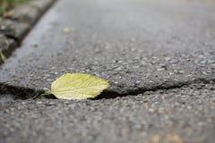 Autumn Leaf på en gata Royaltyfri Foto